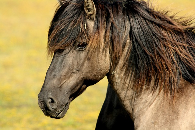 Horse, Nature, Animals, Meadow