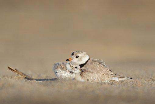 Animals, Avian, Beach, Birds, Depth Of Field, Nature