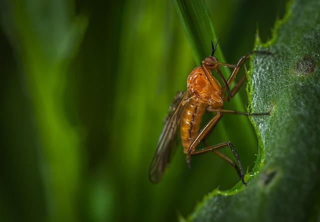 Nature, Insect, Animals, Fly, No One, Macro