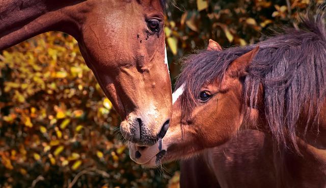 Animal, Horses, Animals, Nature, Pony, Brown, Farm
