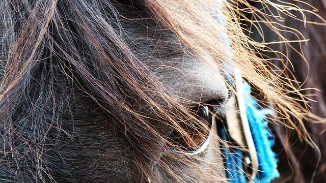 Horse, Animal, Horses, Animals, Pony, Brown, Farm, Mane