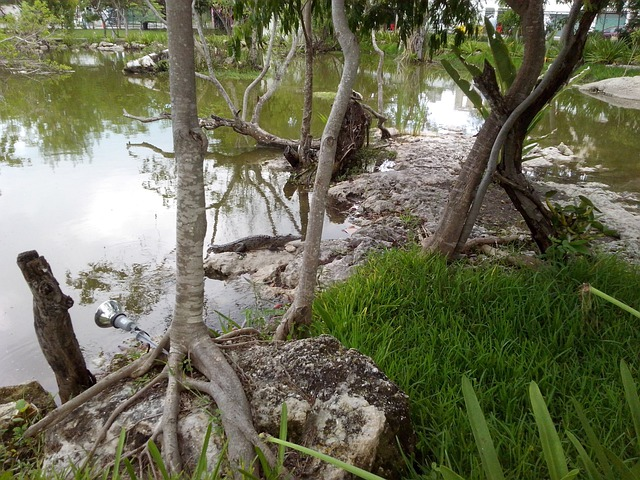 Crocodile, Predator, Animals, Young Crocodile, Cancun