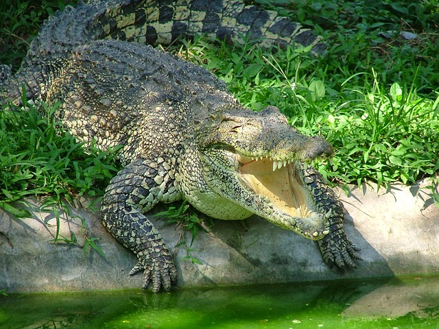 Crocodile, Animals, Reptile, Predator, Nature