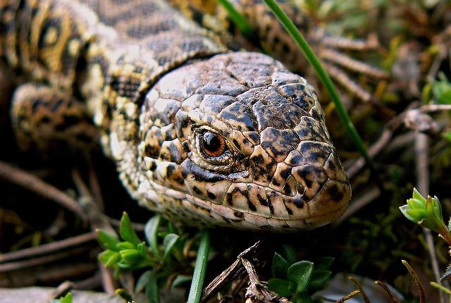 Nature, Reptiles, Animals