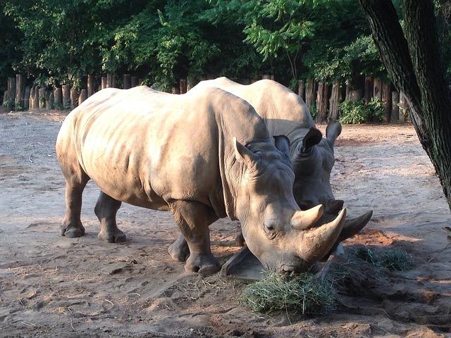 Zoo, Animals, Rhino, Wildlife, Nature, Wild