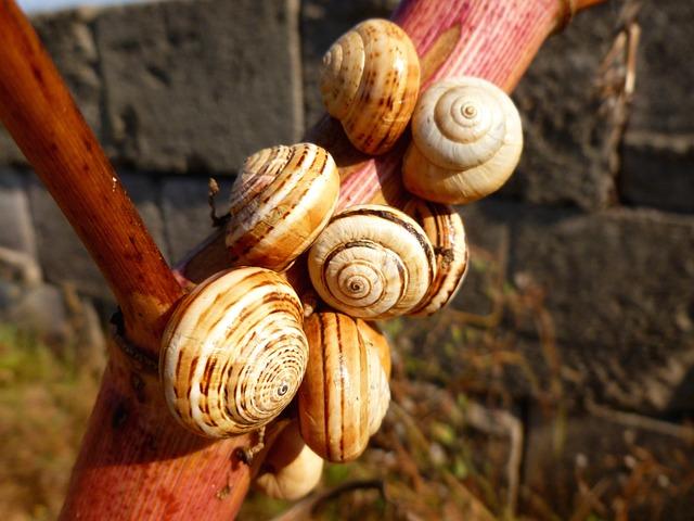 Snail Shells, Snails, Close, Branch, Animals, Nature