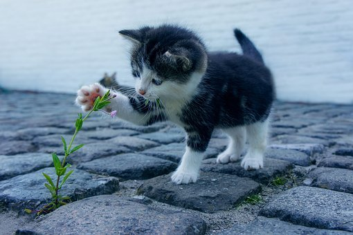 Cat, Flower, Stone, Kitten, Pet, Cats, Flowers, Animals
