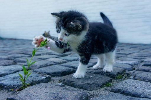 Cat, Flower, Stone, Kitten, Pet, Cats, Flowers, Animals