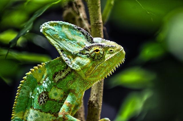 Tierpark Bochum, Animals, Chameleon, Nature, Bochum