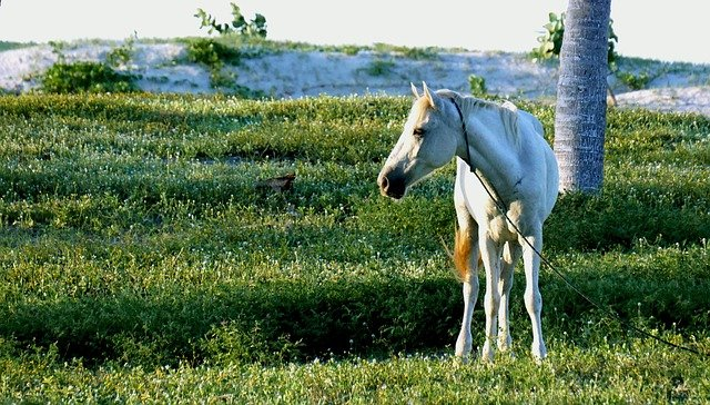 Vet, Animals, Horse, Nature
