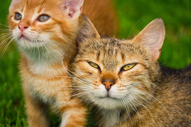 Kitten, Cat, Pet, Feline, Animals, Fur, Kitty, Whiskers