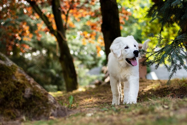 Dog, Puppy, Sheep-dog, Biala, Animals, White, Clean