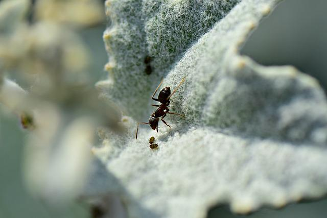 Ant, Insect, Animal, Aphid, Prey, Ant Farming Aphids