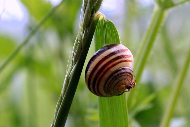 Shell, Snail, Tape Worm, Cepaea Hortensis, Ant On Snail