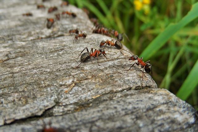 Nature, Ants, Wood, Macro, Ant, Closeup, Detail Of