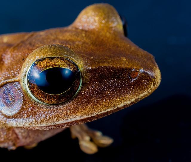 Tree Frog, Anuran, Frog, Amphibians