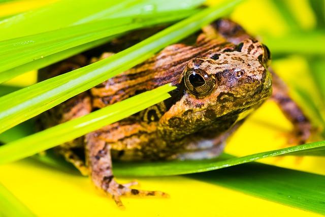 Tree Frog, Anuran, Frog, Amphibians, Animal