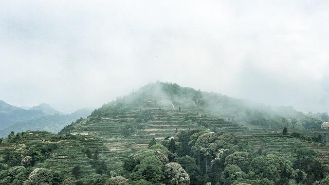 Anxi Tieguanyin Tea, Mountain Tea