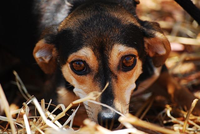 Dog, Eyes, Anxious, Close Up, Animal Shelter, Affection