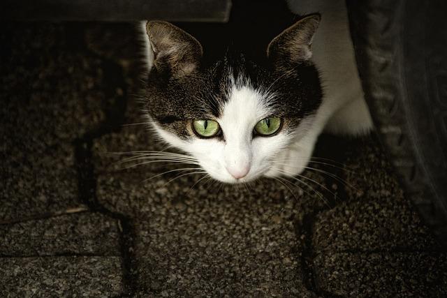 Cat, Scheu, Cat's Eyes, Anxious, Animal