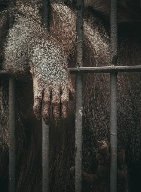 Animal, Ape, Cage, Mammal, Primate, Zoo