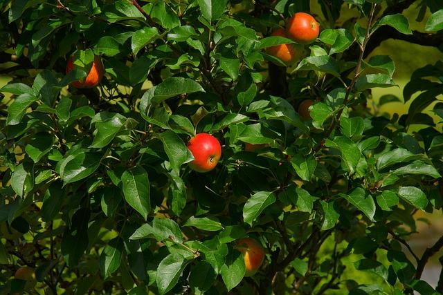 Apple, Apple Tree, Tree, Nature, Fruit, Autumn