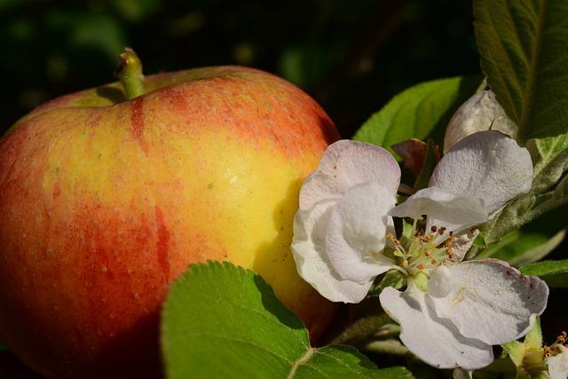 Apple, Apple Blossom, Apple Tree, Close, Healthy