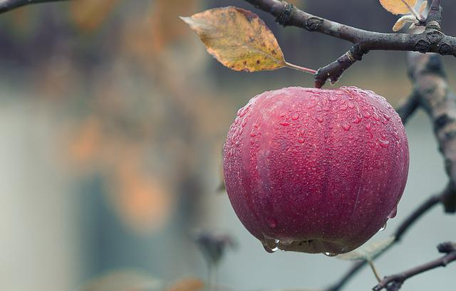 Apple, Fall, Juicy, Food, Autumn, Fruit, Red, Fresh