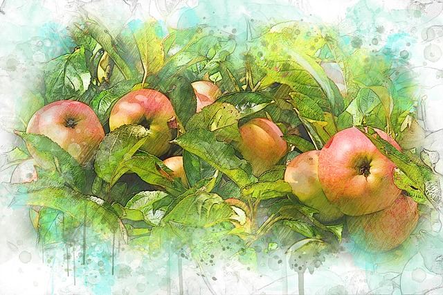 Autumn, Harvest, Apples, Red, Nature, Nutrition