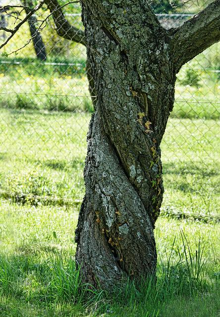 Tree, Nature, Apricot Tree, Spring, Tribe, Wood, Log