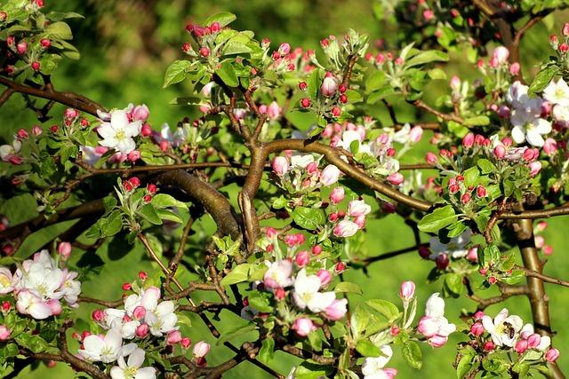 Flowering Trees, Spring, Apple, Tree, Nature, April