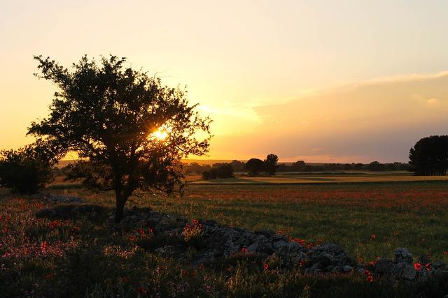 Murgia, Puglia, Apulia, Landscape, Ruvo, Campaign