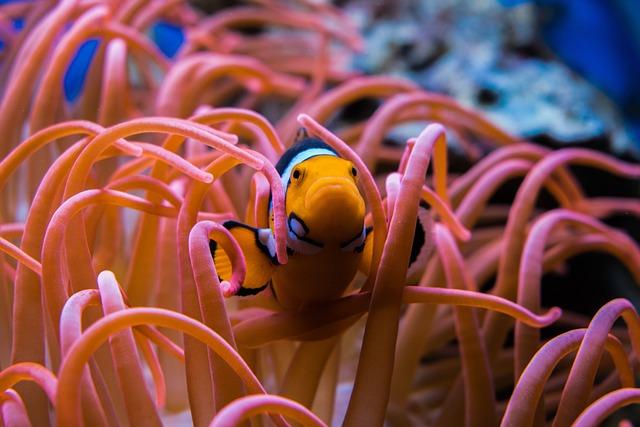 Clownfish, Fish, Aquarium, Underwater, Ocean, Coral