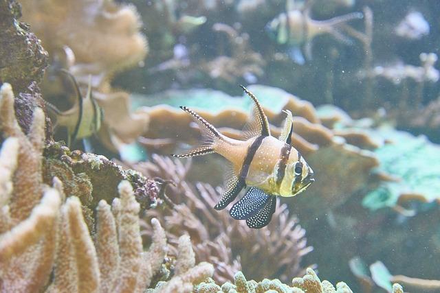 Aquarium, Sea, Fish, Coral, Underwater, Blue Sea