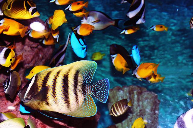 Tropical Fish, Aquarium, Fish, Fish Tank, Sea