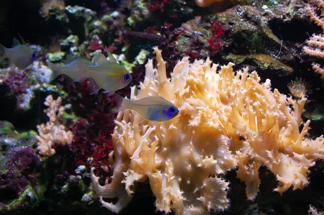 Aquarium, Ornamental Fish, Fish, Transparent, Blue