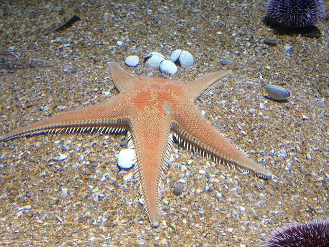 Starfish, Sand, Aquarium