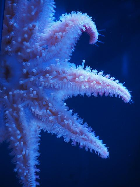 Starfish, Sea, Nature, Marine, Star, Water, Aquarium