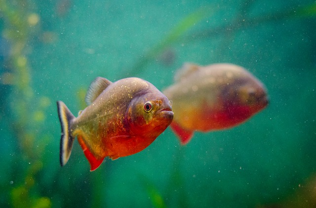 Animal, Aquarium, Fish, Reflection, Swimming