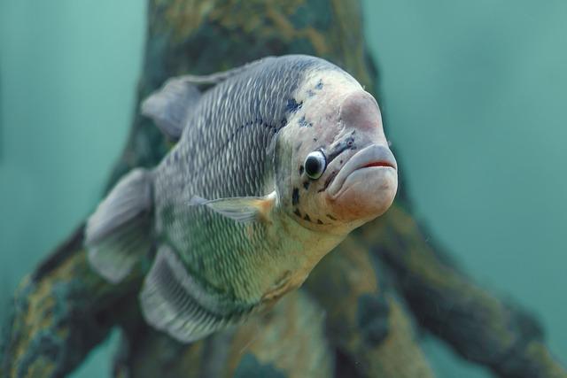 Fish, Aquarium, Water, Undersea World, Underwater