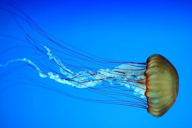 Jellyfish, Marine, Aquatic, Underwater, Aquarium