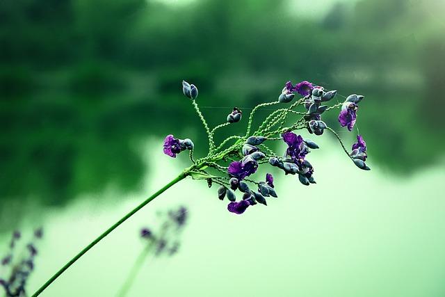 Then Force Flowers, Aquatic Plants, Ornamental Plants