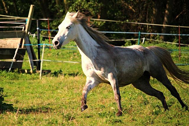 Horse, Arabs, Gallop, Mold, Arabian Horse