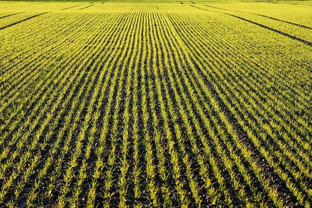 Field, Lines, Green, Arable, Nature