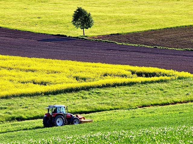 Agriculture, Field Of Rapeseeds, Field, Arable