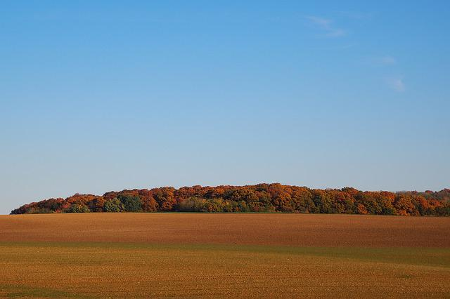 Deciduous Forest, Indian Summer, Forest, Arable, Red