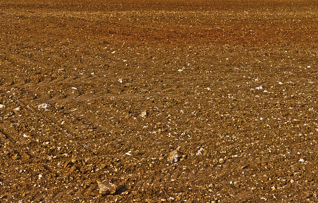 Field, Arable, Steinig, Agriculture, Dry, Lines, Earth