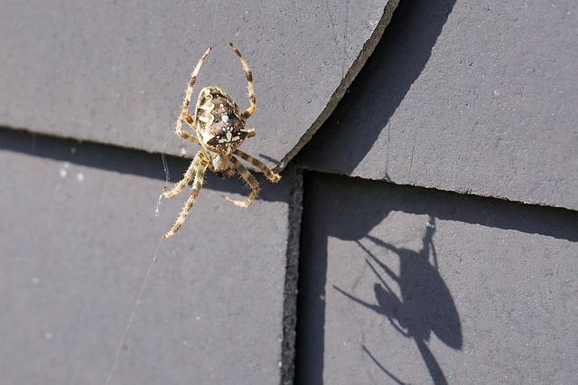 Spider, Insect, Network, Nature, Arachne, Animal