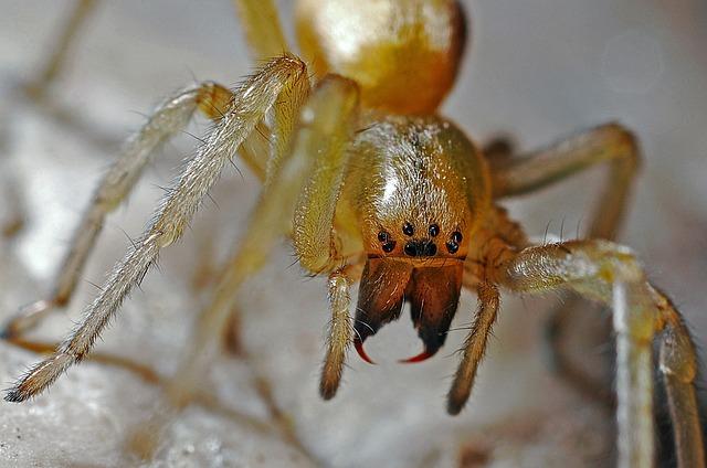 Spider, Arachnid, Macro, Nature, Animal, Predator, Bug