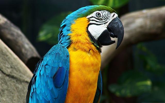 Parrot, Arara, Brazil